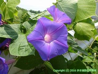 03-017徳島県板野郡板野町