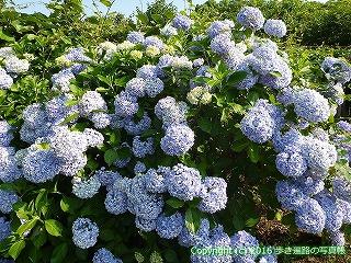 05-012徳島県板野郡板野町
