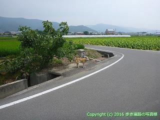 09-015徳島県阿波市