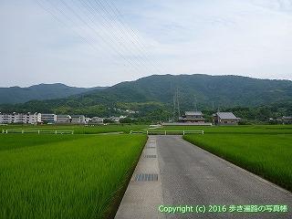 11-095徳島県吉野川市