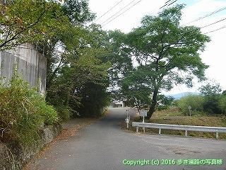 11-203徳島県阿波市