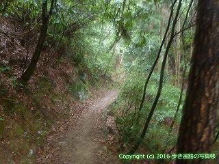 12-032徳島県吉野川市