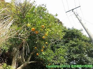2201-049徳島県阿南市