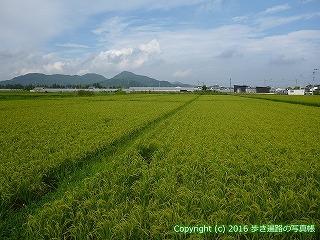 35-071高知県土佐市
