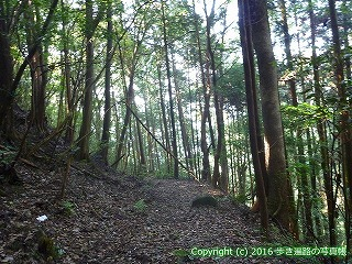 38-054高知県幡多郡黒潮町