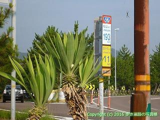 38-377高知県幡多郡黒潮町