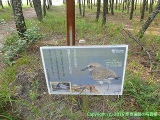 38-393高知県幡多郡黒潮町