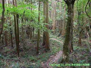 38-791高知県土佐清水市