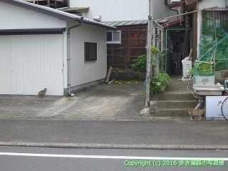 38-821高知県土佐清水市