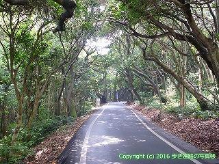 38-924高知県土佐清水市