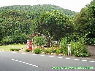 39-042高知県土佐清水市
