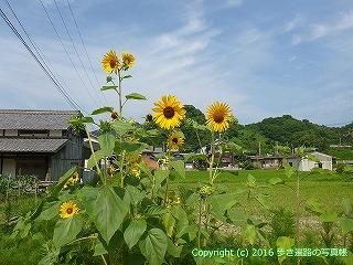 52-119愛媛県松山市