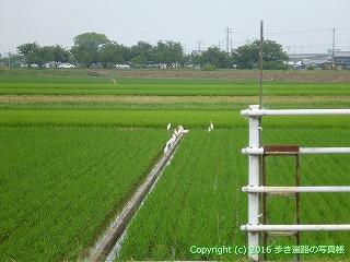 60-156愛媛県西条市