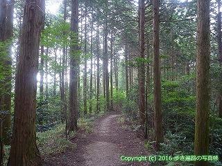 61-028愛媛県西条市