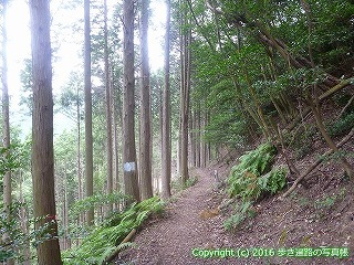 61-039愛媛県西条市