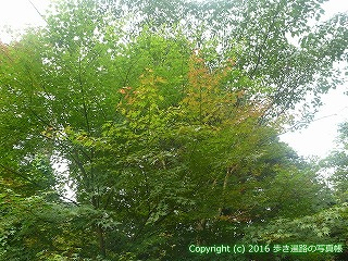 61-088愛媛県西条市