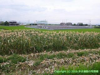 65-009愛媛県西条市
