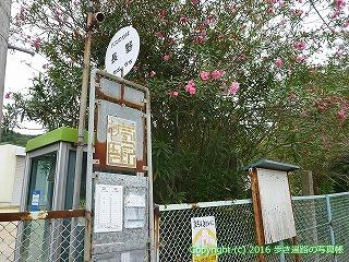 65-183愛媛県新居浜市
