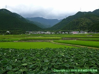 65-209愛媛県四国中央市