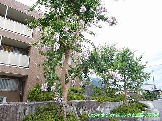 65-341愛媛県四国中央市