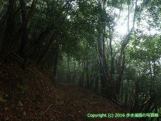 66-157徳島県三好市