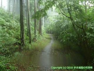 66-204徳島県三好市