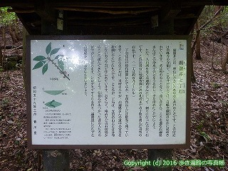 82-036香川県坂出市